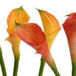 11x14-flowers